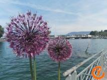 Szwajcaria-Genewa