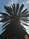 AQSh - Kaliforniya